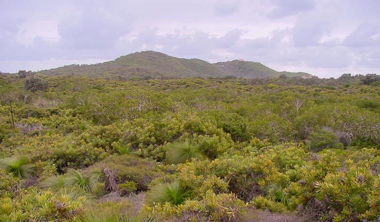 Vegetation of Arakwal National Park. Photo: N Graham