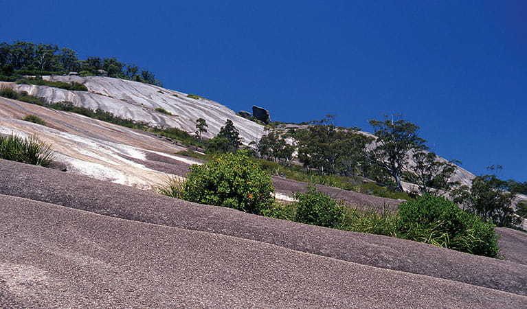 Bald Rock National Park. Photo: Shane Ruming