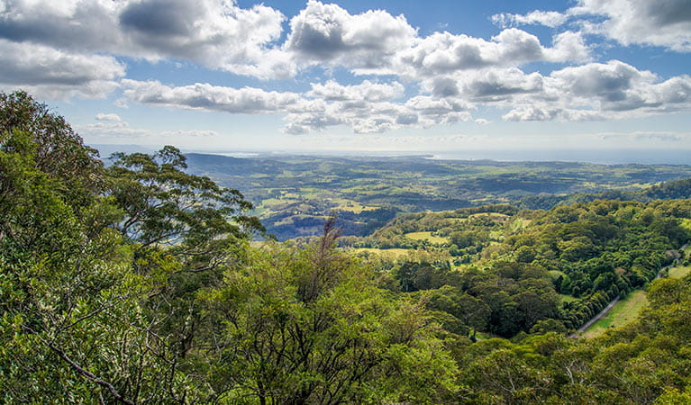 Illawarra lookout walking track, Barren Grounds Nature Reserve. Photo: John Spencer