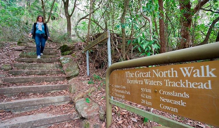Great North walk, Berowra Valley National Park. Photo: Nick Cubbin