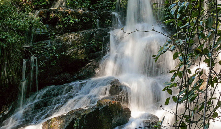 Bangalore Falls, Biamanga National Park. Photo: Helen Clark