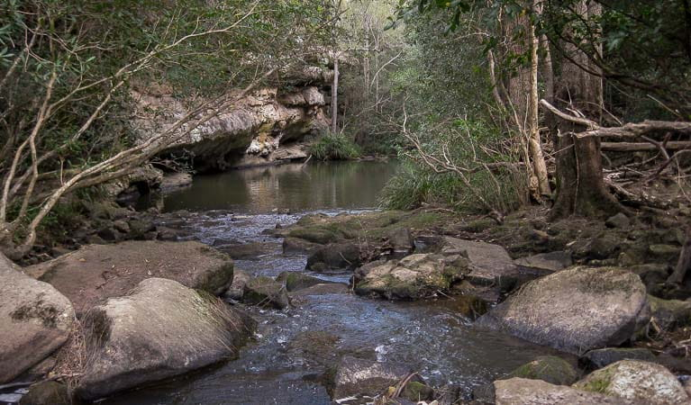 Bomaderry Creek, Bomaderry Creek Regional Park. Photo: OEH