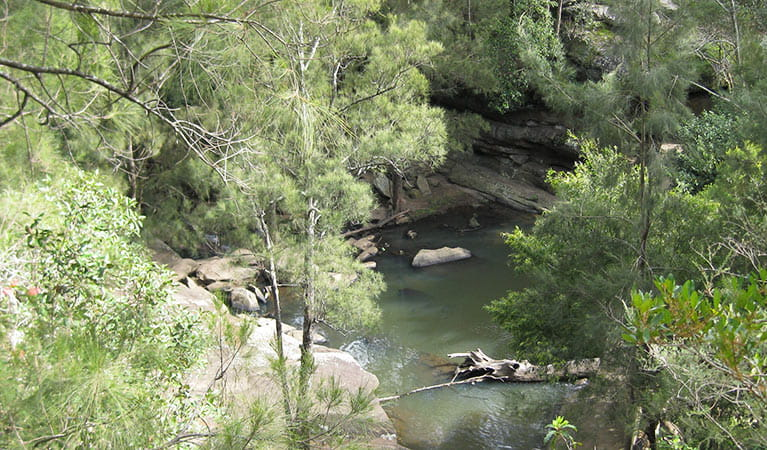 Bomaderry Creek Regional Park. Photo: OEH