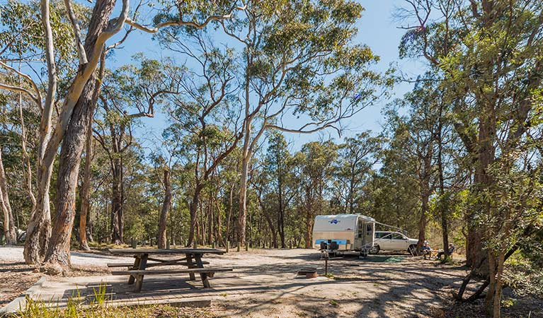 Cypress-pine campground, Boonoo Boonoo National Park. Photo: David Young