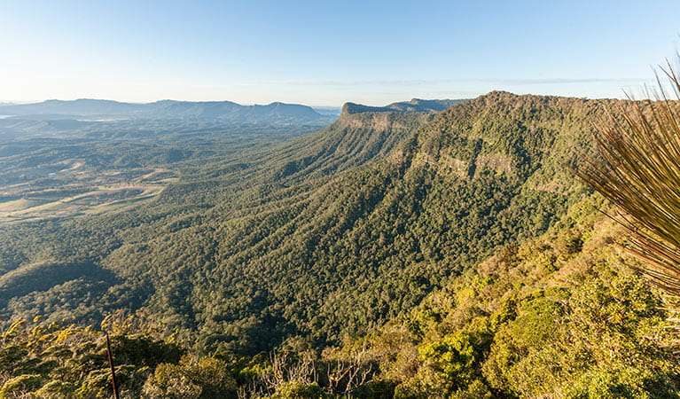 Pinnacle lookout, Border Ranges National Park. Photo: Murray Vanderveer