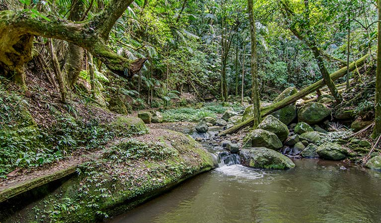 Brindle Creek walking track, Border Ranges National Park. Photo: John Spencer