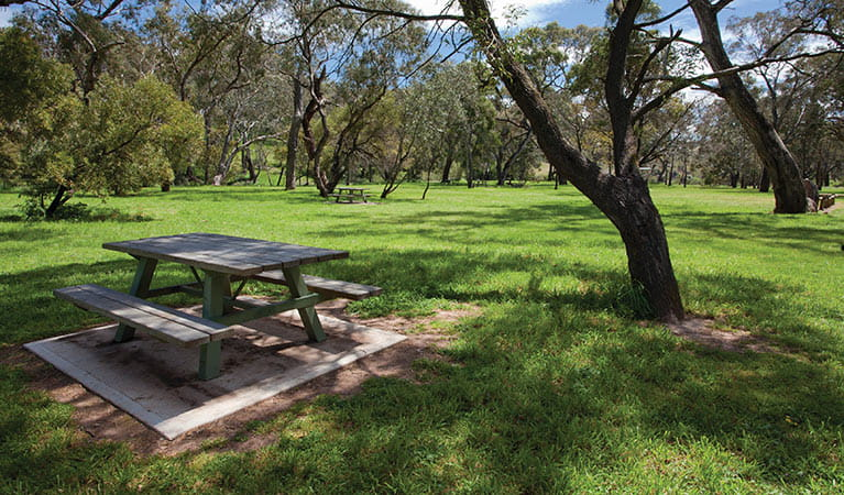 Picnic area, Borenore Karst Conservation Reserve. Photo: OEH