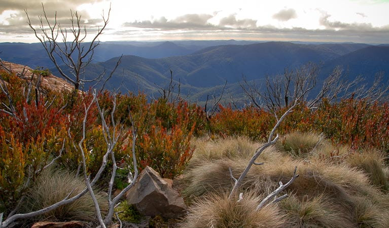 Looking across the mountain range in Brindabella National Park. Photo: OEH