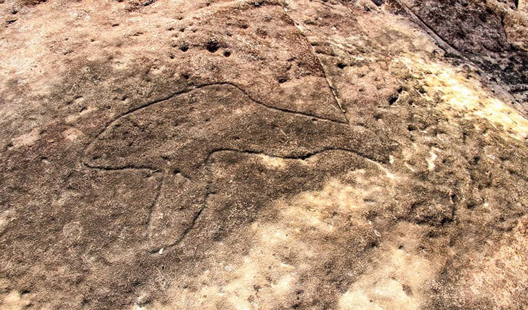 Aboriginal rock carving, Girrakool Loop track, Brisbane Water National Park. Photo: John Yurasek