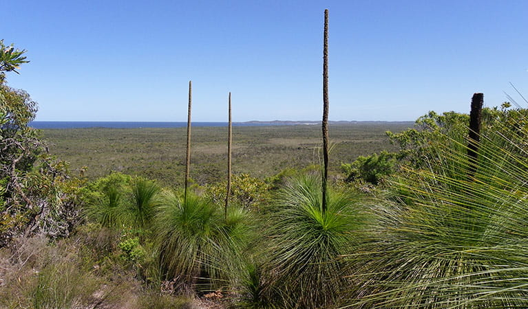 Inland lookout over Broadwater National Park: Photo: L Walker