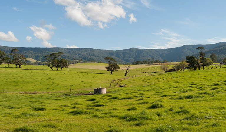 Illawarra Tourist Drive, Budderoo National Park. Photo: Michael Van Ewijk
