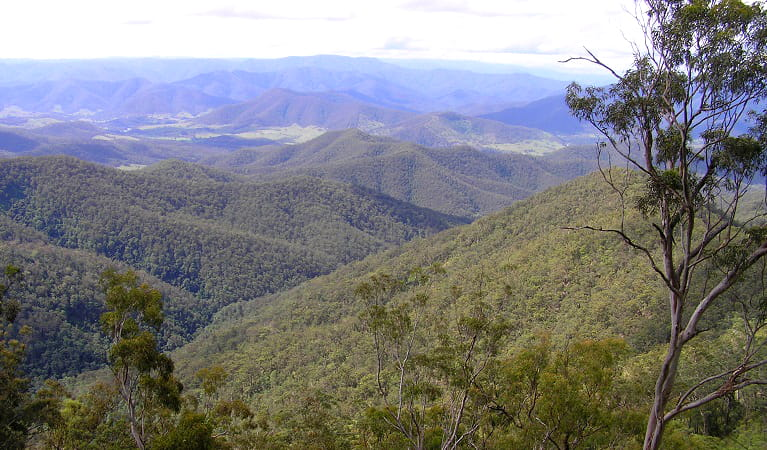 The view from Carrai National Park over the upper Macleay Valley. Photo: Piers Thomas/OEH