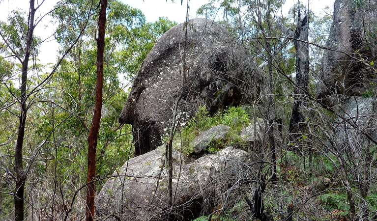 Rock outcrop in Carrai National Park. Photo: Piers Thomas/OEH