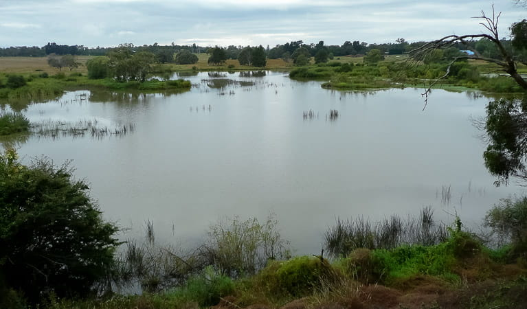 Looking across the lagoon, Cecil Hoskins Nature Reserve. Photo: OEH