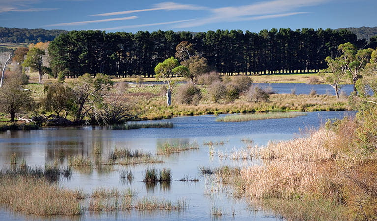 Lagoon at Cecil Hoskins Nature Reserve. Photo: Nick Cubbin