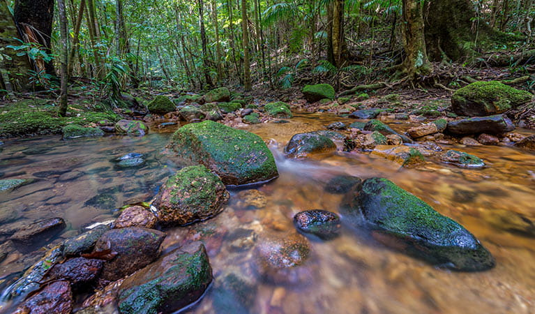 Starrs Creek, Coorabakh National Park. Photo: John Spencer