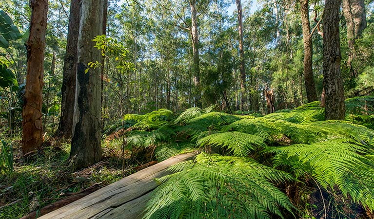 Lush bushland, Dalrymple-Hay Nature Reserve. Photo: John Spencer