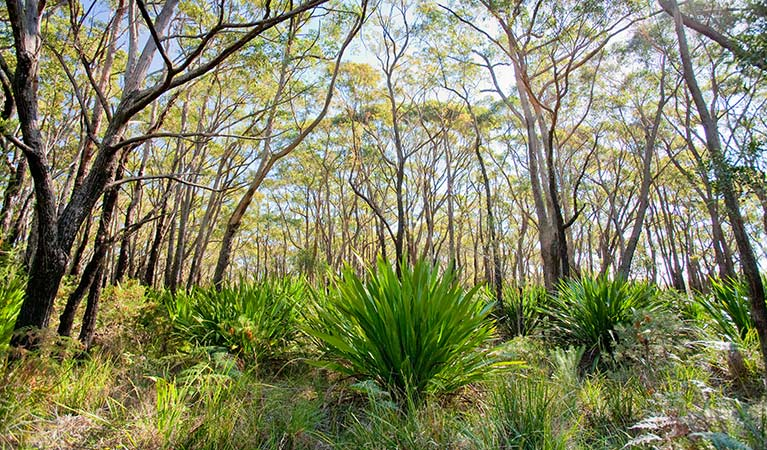 10B Management trail, Dharawal National Park. Photo: Nick Cubbin