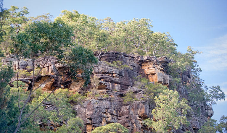Devines Hill, Dharug National Park. Photo: Nick Cubbin