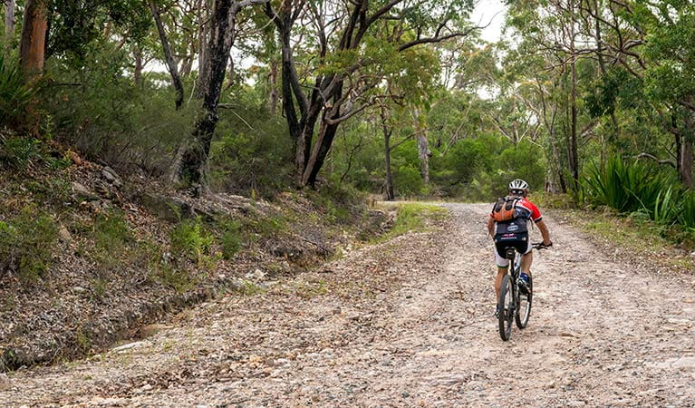 Cyclist on Cawleys Road, Garawarra State Conservation Area. Photo: John Spencer
