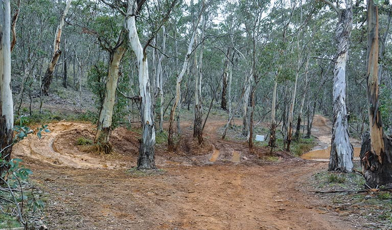 4WD trail in Ben Bullen, Garden of Stone National Park. Photo: David Noble