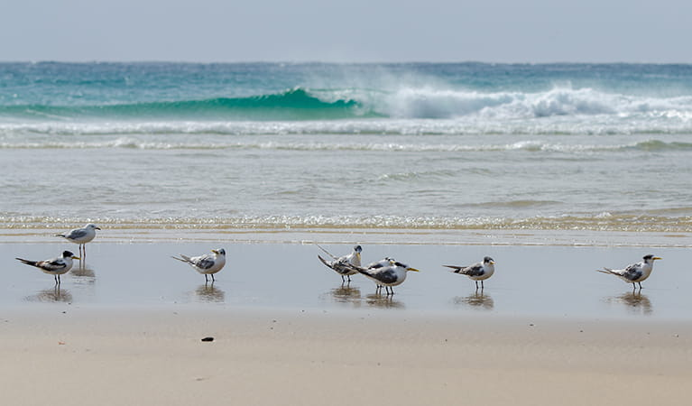 Shore birds on the sand, Goolawah National Park. Photo: John Spencer