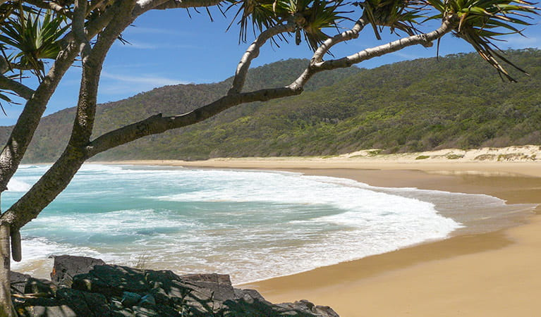 Gap Beach, Hat Head National Park. Photo: Barbara Webster