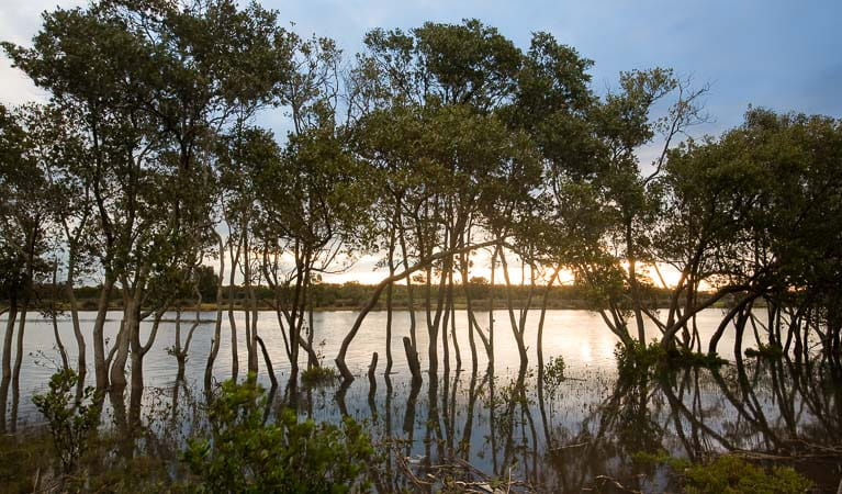 Sunset over Hunter Wetlands National Park. Photo: Susan Davis