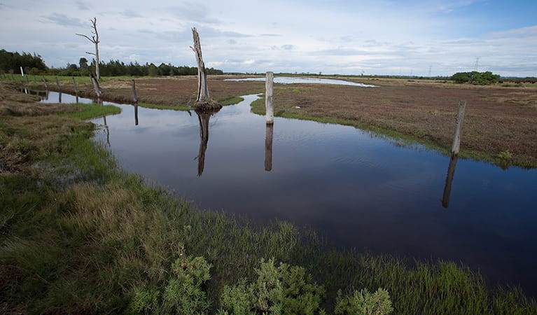 Wetlands, Hunter Wetlands National Park. Photo: Susan Davis