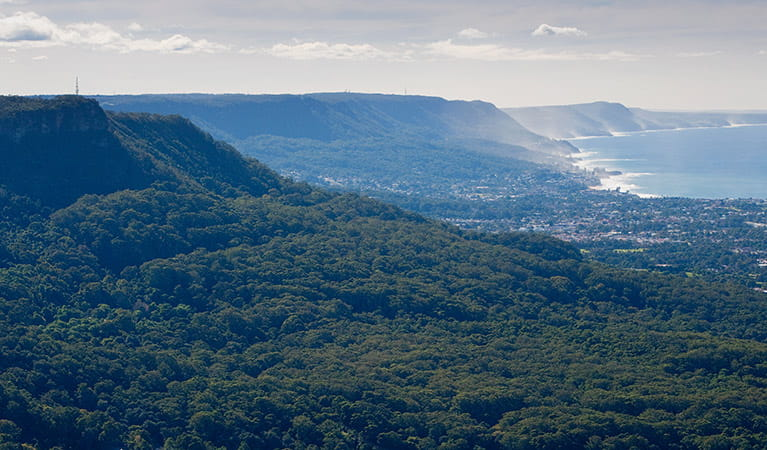 Views across the escarpment, Illawarra Escarpment State Conservation Area. Photo: Nick Cubbin