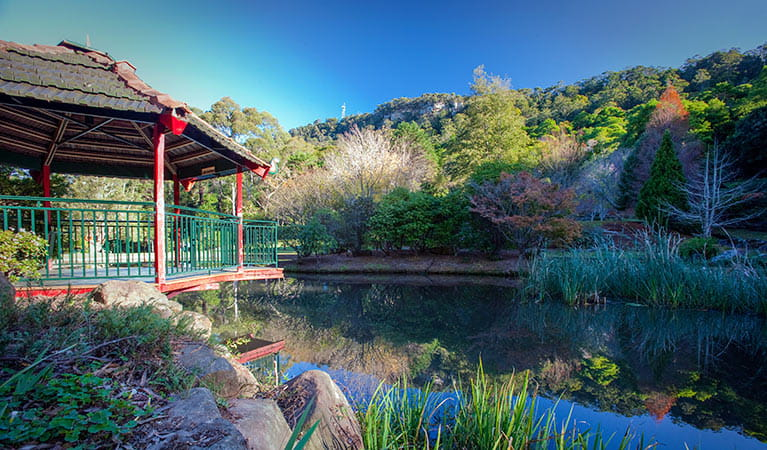Rhododendron Park picnic area, Illawarra Escarpment State Conservation Area. Photo: Nick Cubbin