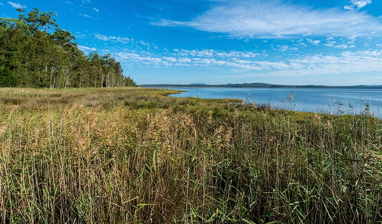 Lake Innes, Lake Innes Nature Reserve. Photo: John Spencer