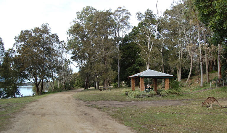 Morriset picnic area, Lake Macquarie State Conservation Area. Photo: Susan Davis