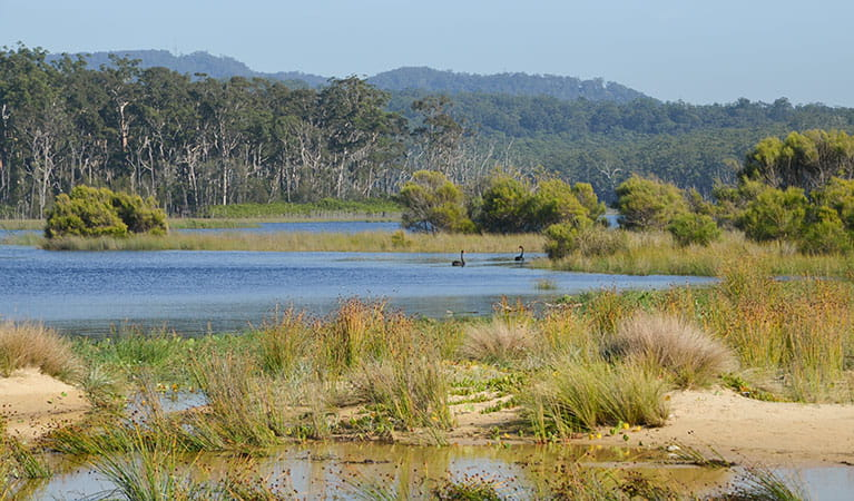 Meroo Lake, Meroo National Park. Photo: M Jarman