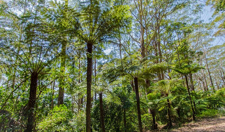 Forest canopy in Middle Brother National Park. Photo: John Spencer