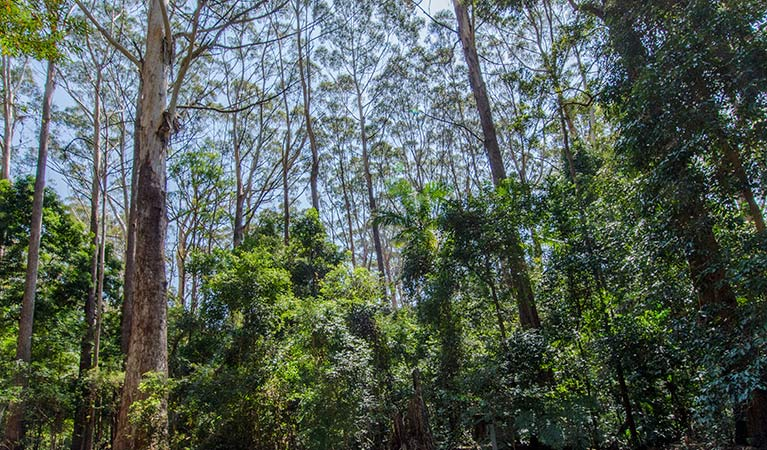 Bird Tree picnic area, Middle Brother National Park. Photo: John Spencer