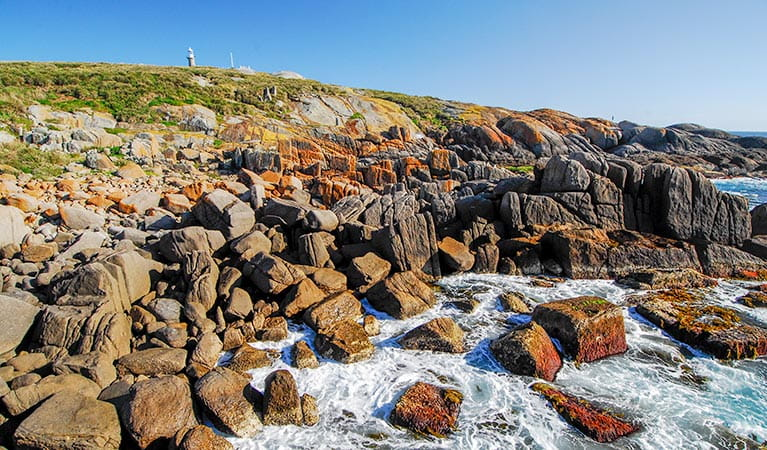 Rocky shoreline, Montague Island Nature Reserve. Photo: Stuart Cohen