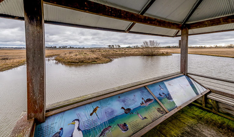 Bird watching platform, Mother of Ducks Lagoon Nature Reserve. Photo: John Spencer