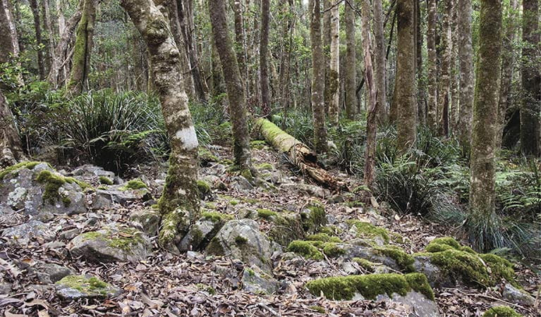 Summit walking track, Mount Hyland Nature Reserve. Photo: Shane Ruming