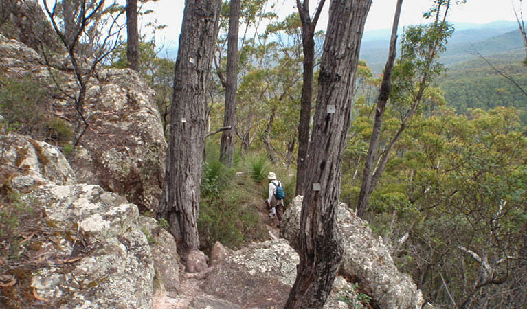 Mount Imlay Summit walking track, Mount Imlay National Park. Photo: David Costello