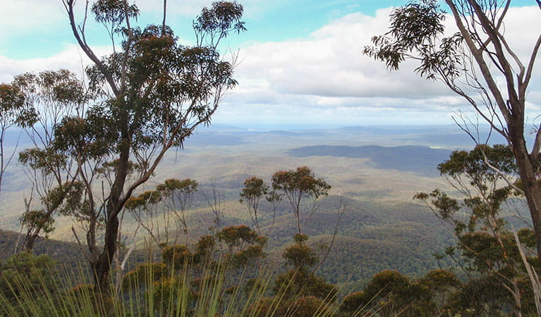 Views from Mount Imlay Summit walking track, Mount Imlay National Park. Photo: David Costello