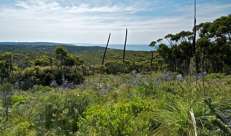 Moonee Beach trail, Munmorah State Conservation Reserve. Photo: John Spencer