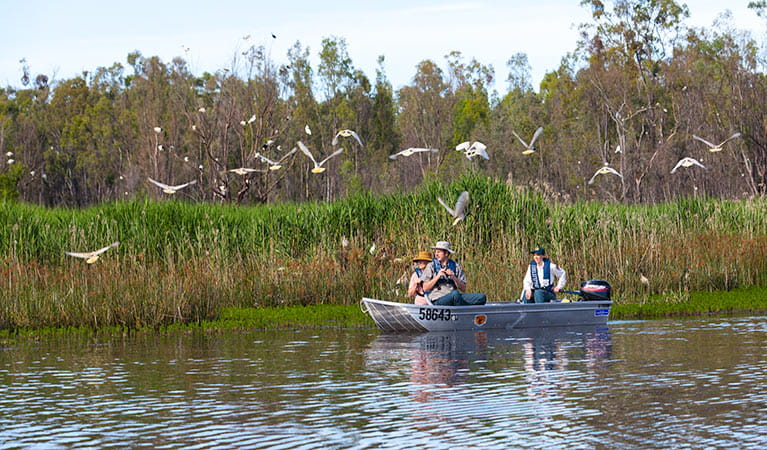 Bird watching on the river, Murray Valley National Park. Photo: David Finnegan