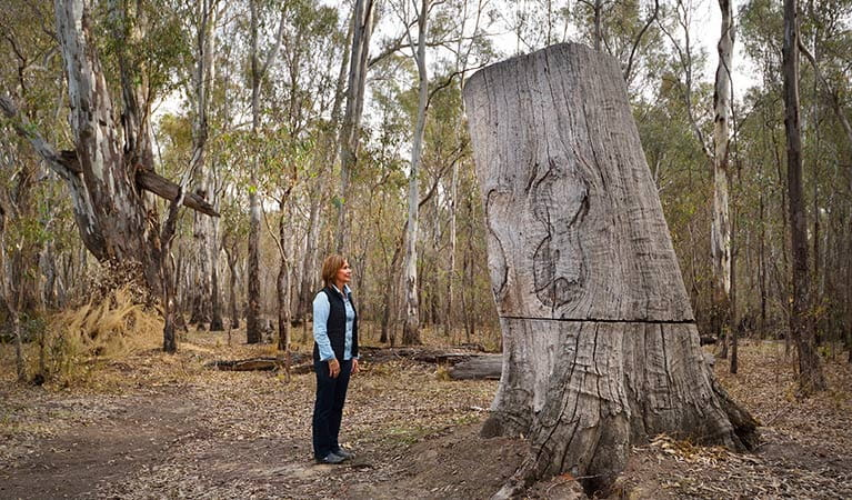 Woman observes red gum logging, Murray Valley National Park. Photo: Gavin Hansford
