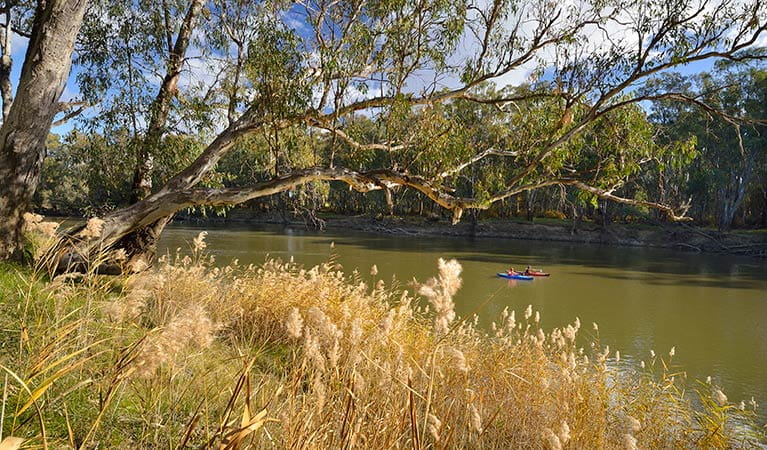 Kayaking on the river, Murrumbidgee Valley National Park. Photo: Gavin Hansford