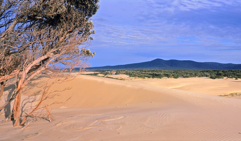 Cape Howe dunes, Nadgee Nature Reserve. Photo: John Ford
