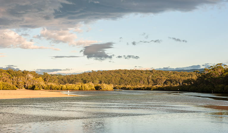 Narrawallee Inlet walk, Narrawallee Nature Reserve. Photo: Michael van Ewijk