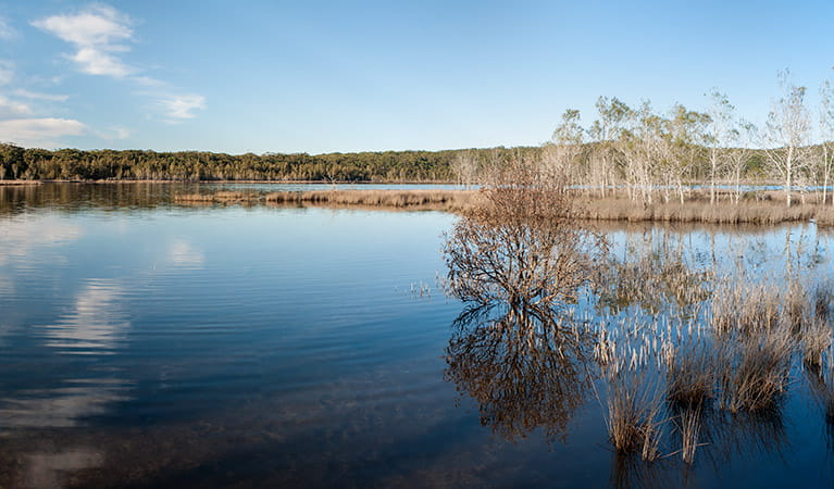 Pattimores Lagoon, Narrawallee Nature Reserve. Photo: Michael van Ewijk
