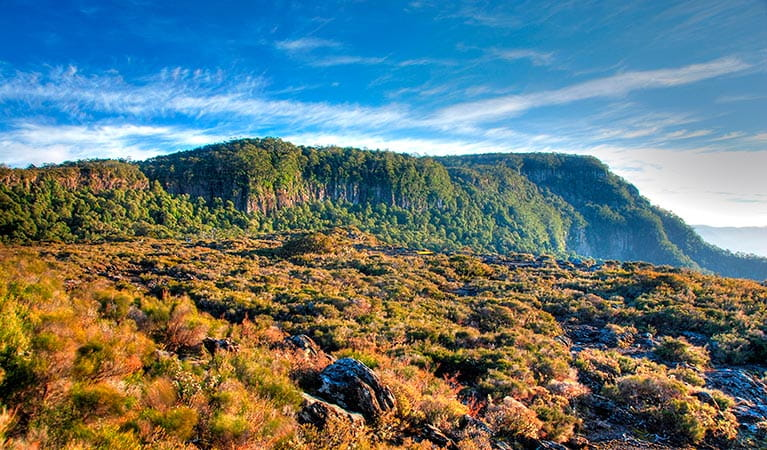 Wrights lookout, New England National Park. Photo: S Ruming