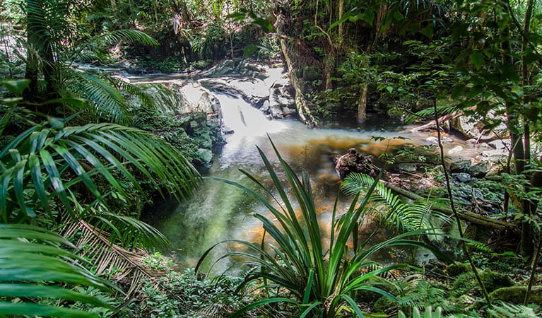 Rainforest creek flowing through Nightcap National Park. Photo: John Spencer